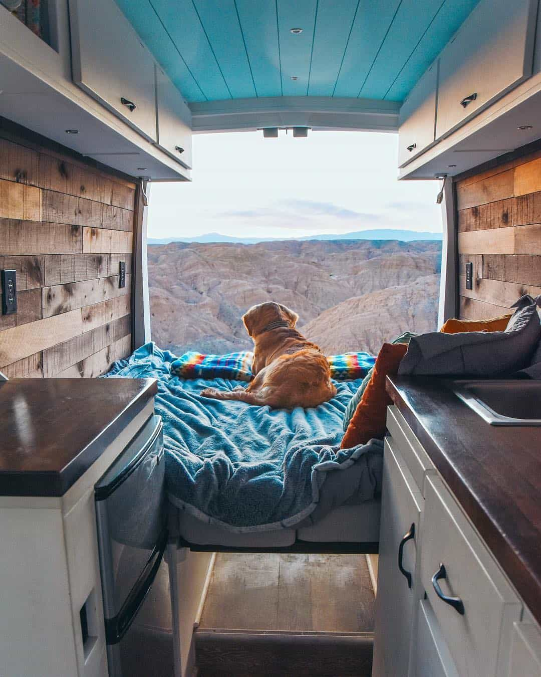 dog camper van conversion