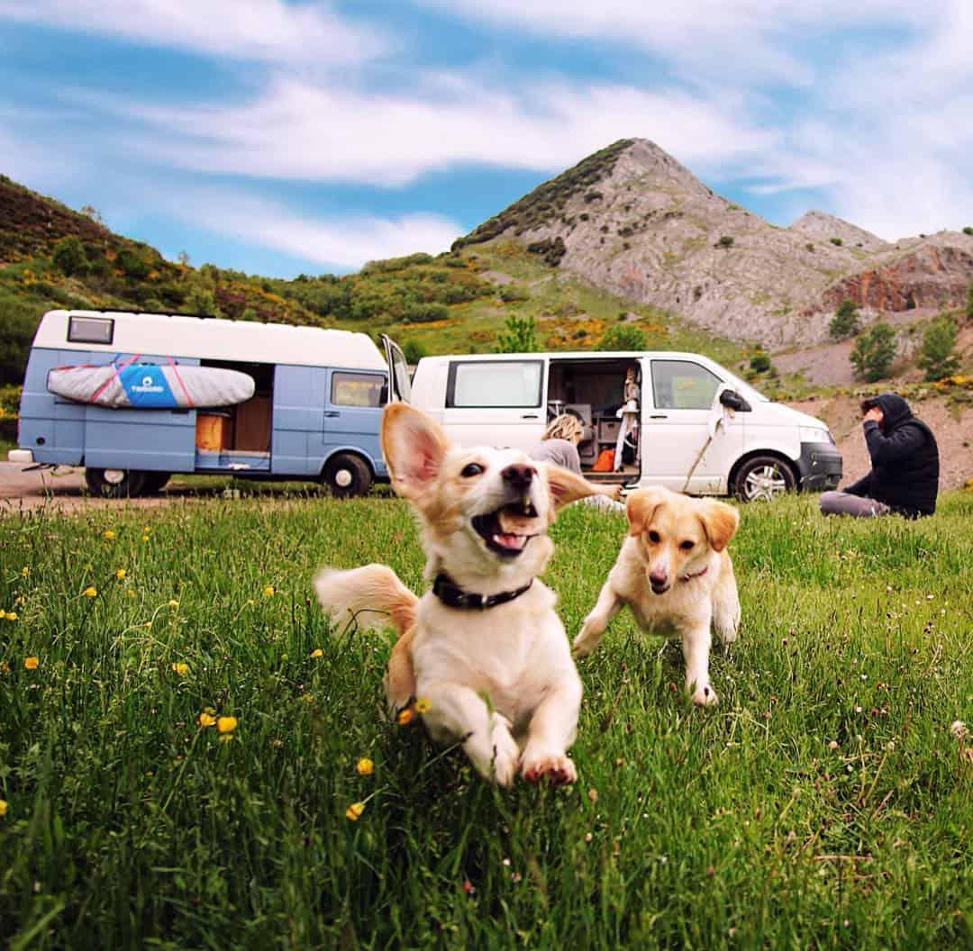 van life dog